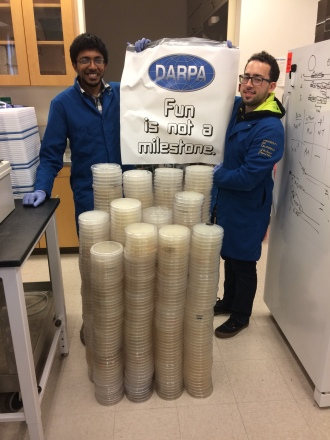 Arjun, Muaeen, and fluctuation analysis plates (the large kind!), 2016